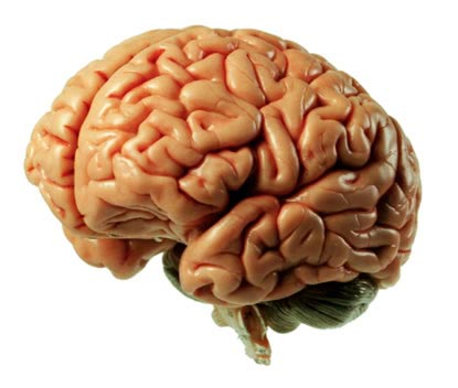 A Brain Injry Requires The Advice Of A TBI Lawyer in Orlando Florida